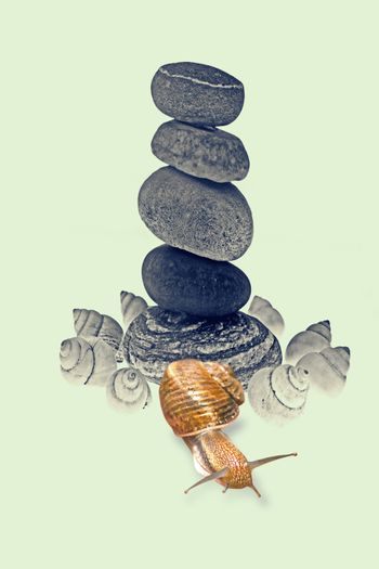 Snail Near Five stones balanced on top of eachother