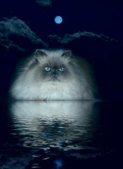 cat lying near the water moonlit night