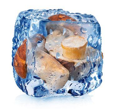 Mushrooms in ice cube