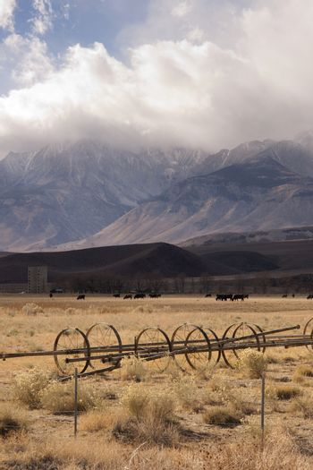 Cattle graze under a changing sky on this California Ranch