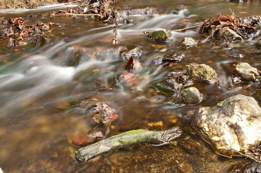 Stream flowing in the forest