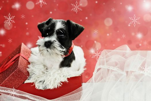 Little Puppy in a Christmas Box