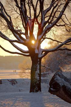 Winter tree with sunlight peeking through