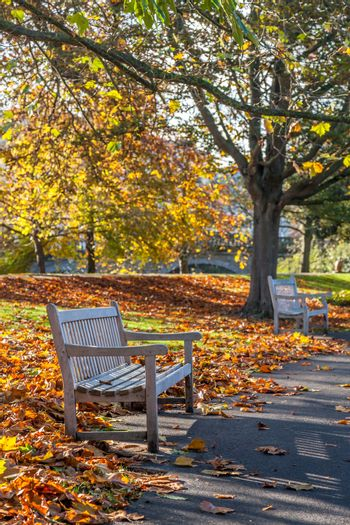 Bright photo of a bench in public garden in the autumn