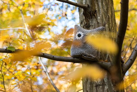 Soft toy owl is placed in autumn forest