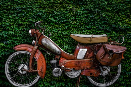 Vintage 60s French Moped Or Scooter With Pannier Bag And Flat Tyre Or Scooter Against An Ivy Background