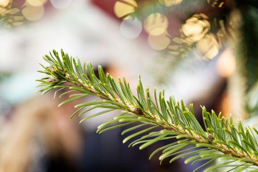conifer on Christmas Market
