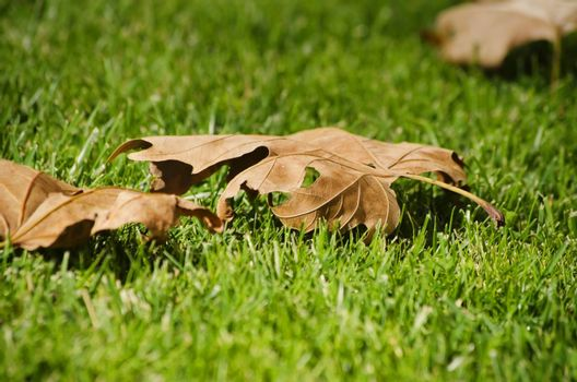 Dry Autumn Leaves At Green Grass