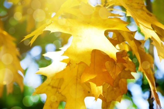 Photo of Autumn Leaves in Sunny Day