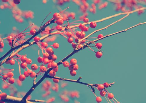 branches of a tree with red berries