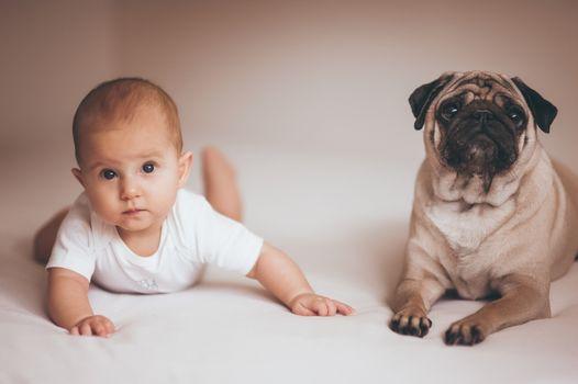 new born baby girl with pug dog