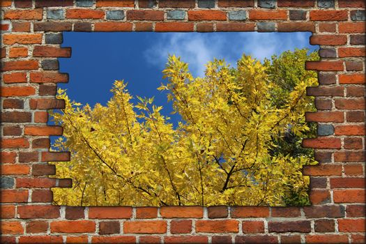 broken brick wall and view to Autumn yellow tree