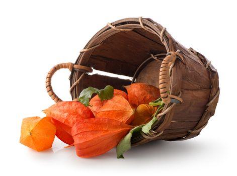 Physalis in a basket