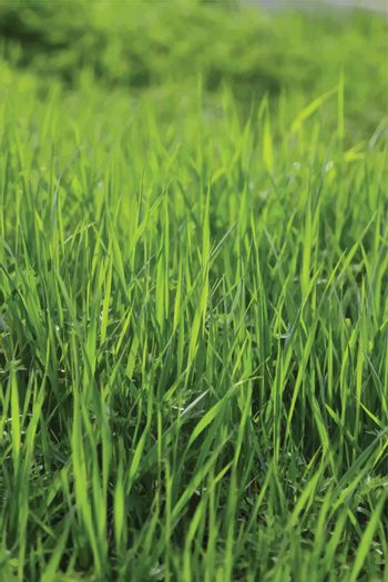 green grass vector realistic background