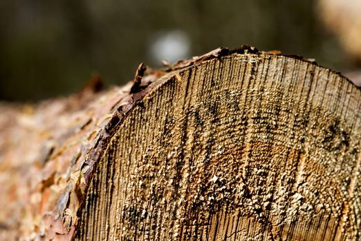 part of cutted firewood with blured background. horizontal image