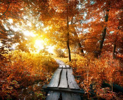 Autumn and bridge