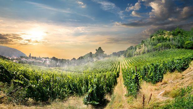 Vineyard in mountains