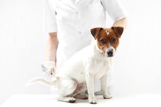 Dog on vaccination vet