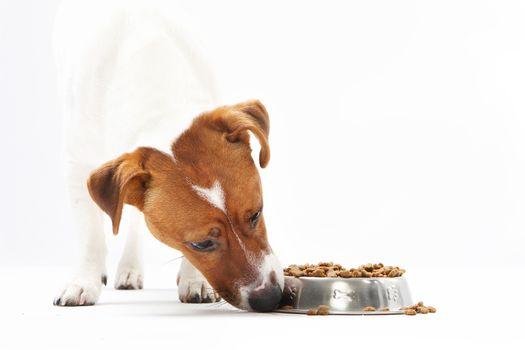 Vitamin delicacy, healthy diet dog