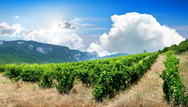 Mountains and vineyard