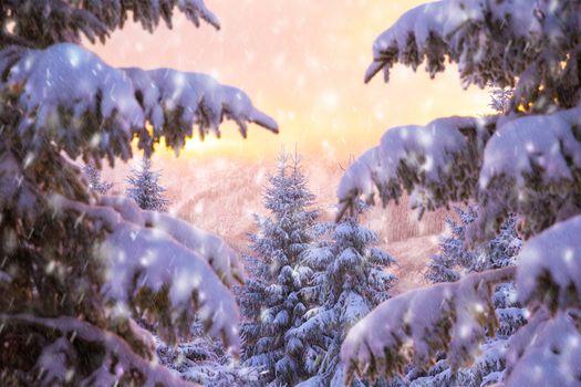 Beautiful winter nature
