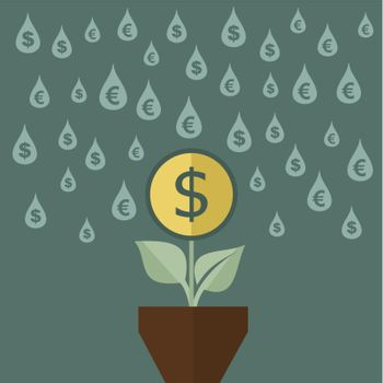 money flower in the pot drops