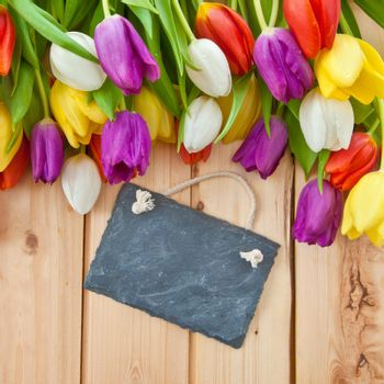 Colorful tulips in springtime