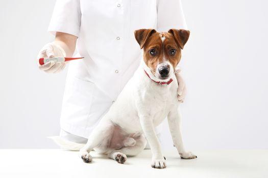 Sick dog, healthy dog, dog doctor