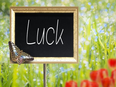 Chalkboard with text Luck