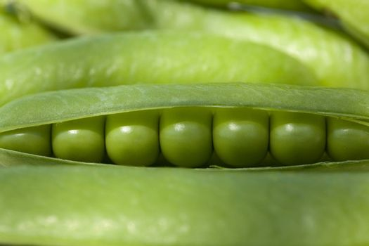 Freshly picked  green peas in open pods
