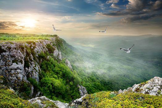 Birds over plateau