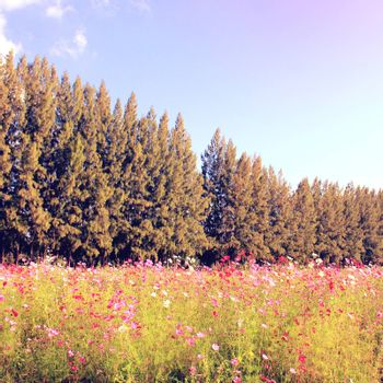 Beautiful trees in flowered field with retro filter effect