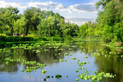 Summer on river