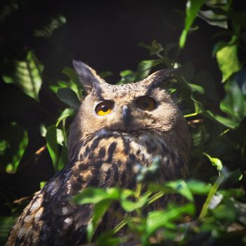 Photo of Single Big Owl Over Green Leaves
