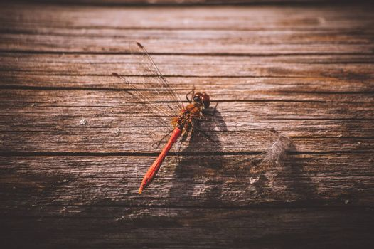 orange dragonfly on wooden texture close up