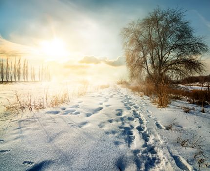 Snowy winter in countryside at sunny morning