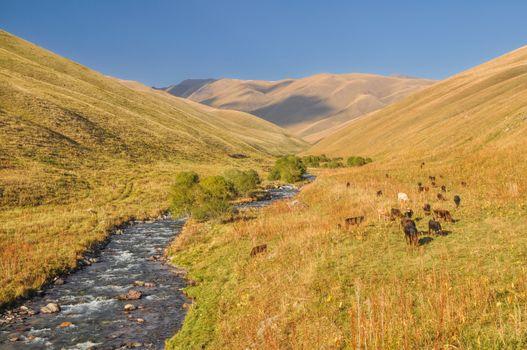Grasslands in Kyrgyzstan