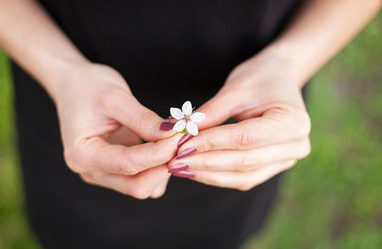Woman hand with a spring blossom. Sakura flower