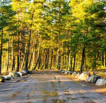 Wet dirt road going through a forest