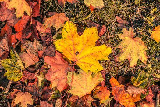 Autumn leaves in november