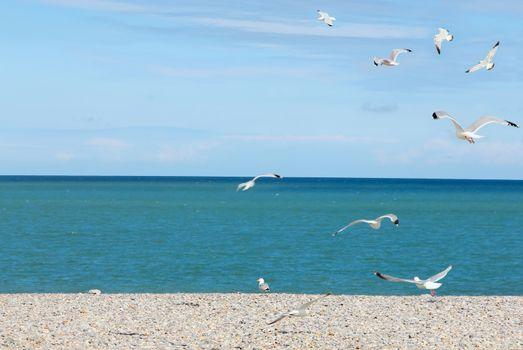 Seagulls on pebble beach