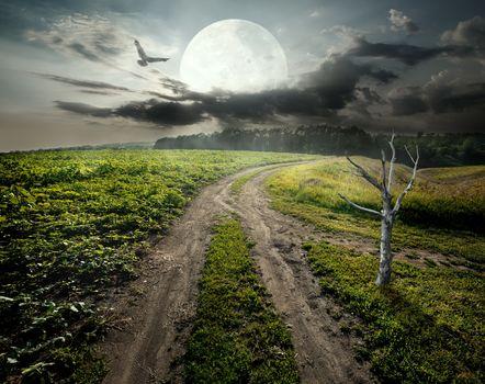 Dry tree and moon