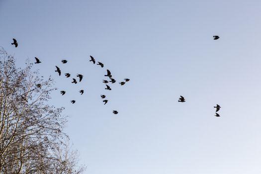 Birds Leaving Tree in Winter