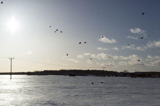 Birds Flying over Winter Field