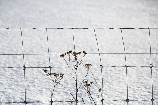 Flowers infront of Fence in Winter