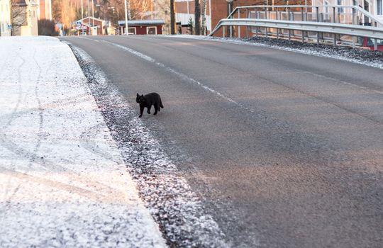 Black Cat Crossing Road in Winter