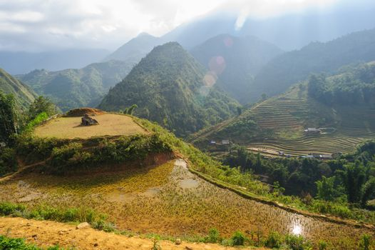 Rice fields on terraced of  Cat Cat Village, Sapa Vietnam.