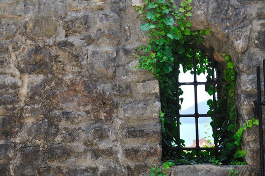 window old plant