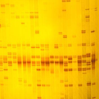 plant DNA fingerprint