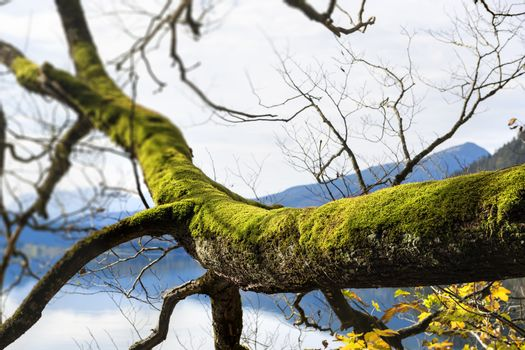 branch with moss